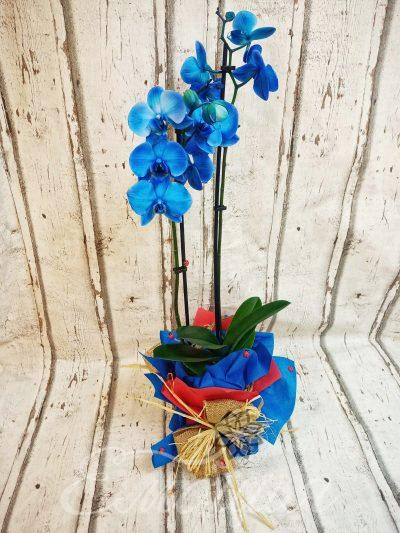 Синя орхидея