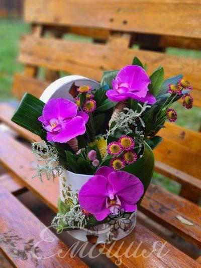 Розово сияние - три орхидеи в кутия